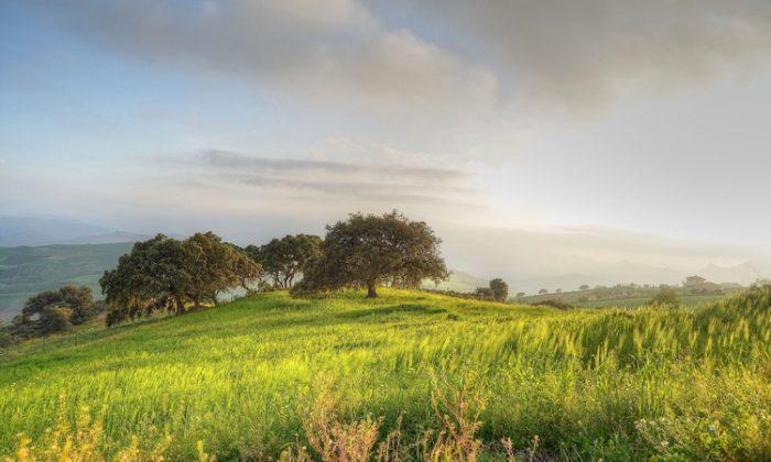 Разходка сред природата е една чудесна възможност за почивка от ежедневния стрес
